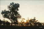 lake bei quilpie