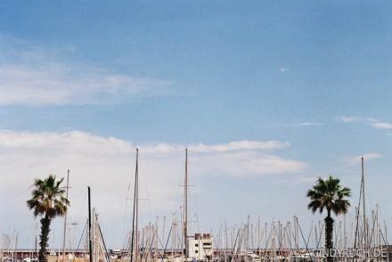 palm sail
