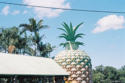 pinapple farm IV