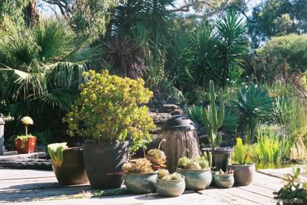 helen's garden II