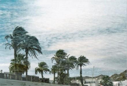 palmenwasser