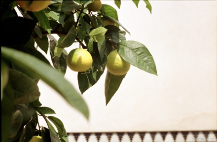 lemonlove