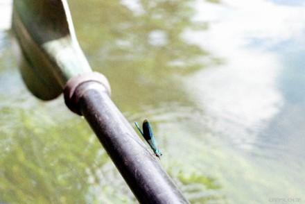 balancing dragonfly