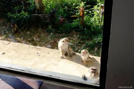 verdrehter zoo