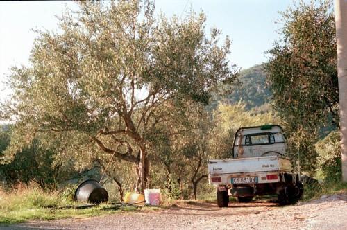 cindyruch_olivenernte